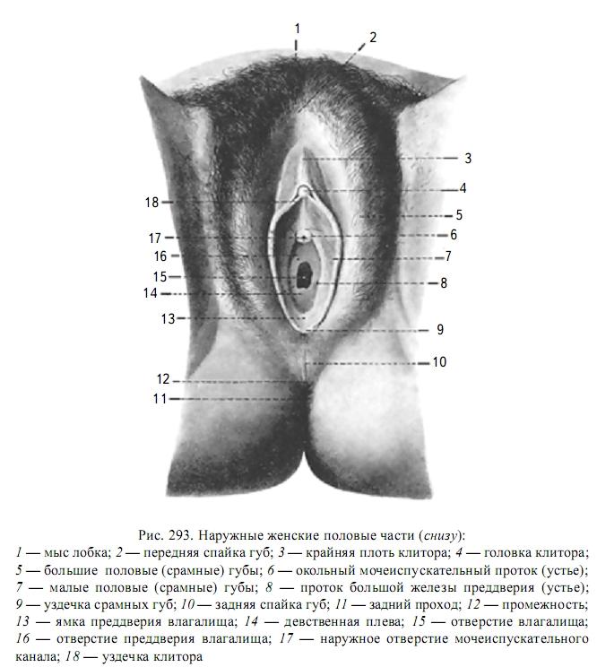 Sexualleben. Anatomie und Physiologie der Geschlechtsorgane