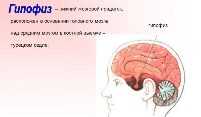 Welche Medikamente stimulieren die Entwicklung von Glückshormonen ...